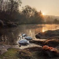 На пруду... :: Сергей
