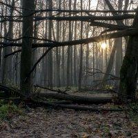 Там лес и дол видений полны... :: Владимир Гараган