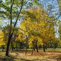 В нашем парке :: Варвара