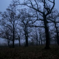 страшный лес :: Vano Shumeiko