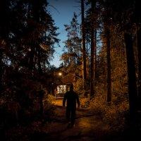 Выход из леса :: Сергей Исайчев