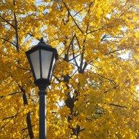 Осень в московском парке :: Владимир Брагилевский