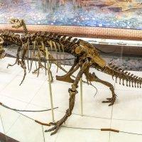 Музей палеонтологии Москва. :: юрий макаров