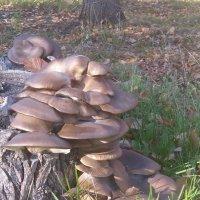 Грибы-грибочки :: Евгения Полякова