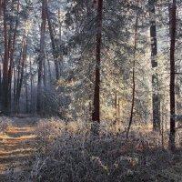 Морозцем первым солнечный туман... :: Лесо-Вед (Баранов)