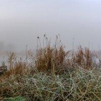 Туманная осень. :: Владимир M