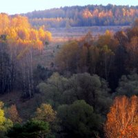 Лес осенью :: Жанна