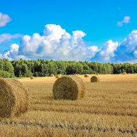 Теплый август :: Нина Кутина