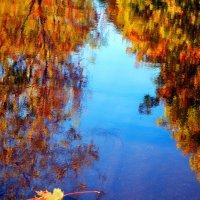 Осенние мотивы. Кленовый лист. :: Николай Ярёменко