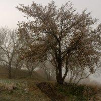 Тема о тумане. :: Владимир M