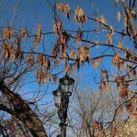 На фоне неба ноября. :: Татьяна Помогалова