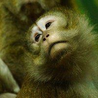 Чудо природы !!!!! :: kolyeretka