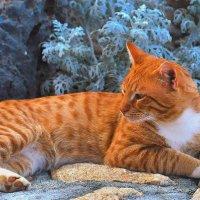 Кот на о. Крит.. :: Serafima7
