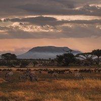 Вечерняя трапеза в саванне... Танзания! :: Александр Вивчарик