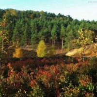 Осень в вересковой долине :: Nina Yudicheva