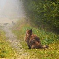 Кошку бы не потерять в таком тумане...) :: Татьяна Глинская