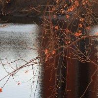 Осенний арт :: Екатерина Торганская