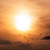 Август месяц, солнце в дымке Парит, как перед дождём... :: Анатолий Клепешнёв