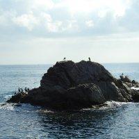 Птицы на островке :: Natalia Harries