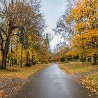 Дорога в  осень :: Aleksandr Papkov