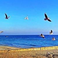 море, чайки, лепота... :: Александр Корчемный
