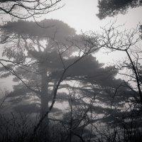 Заколдованный лес :: Mari_L