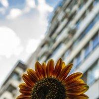 Городские цветы. :: Ирина Комолова