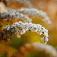 Золотая осень :: OLGA OLGA
