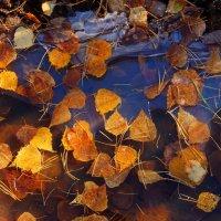 Осенний холодец :: Сергей Шаврин