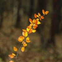 осень... :: Murtuzzz