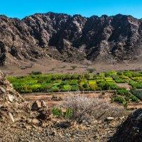 оазис в пустыне Фуджейра :: Георгий А
