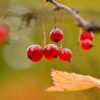 Из осеннего леса :: Татьяна Соловьева