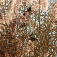 птички-невилички :: Alisa Koteva