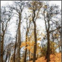 В парке осень... ( 8 ). :: Юрий Гординский