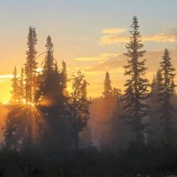 Разбудило солнце лес :: Сергей Чиняев