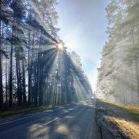 ...и ярким солнечным лучом, пронзает утренний туман.. :: Алексей