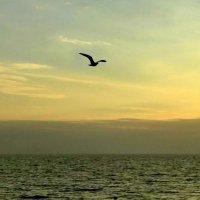 Чайка и море :: Марина Таврова