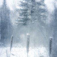 Ещё под снегом уцелели Сухие стебли камыша. :: Вадим Басов