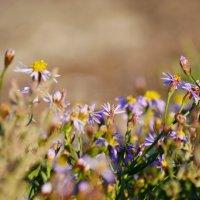 Последние цветы осени (2) :: Андрей Козлов
