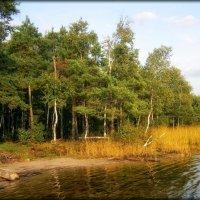 На Ласковском озере :: Андрей Пахомов