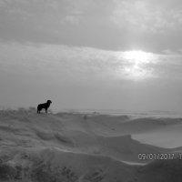 Одиночество :: Светлана Рябова-Шатунова