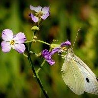 и снова бабочки 11 :: Александр Прокудин