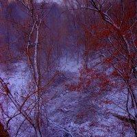 слияние зимы и осени :: Наталья Сазонова