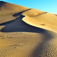 Пески. Извивы желтых линий :: Георгий А