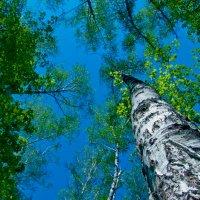 Весенние Небеса :: Vera Ostroumova