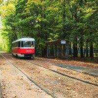 Трамвай идущий в осень :: Ольга