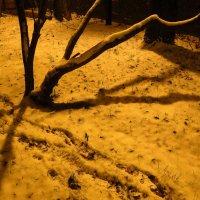 Первый снег в Москве :: Андрей Лукьянов