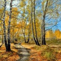 По тропам осени :: Mikhail Irtyshskiy