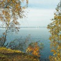 Осень на берегу озера Разлив (06) :: Виталий
