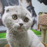 Котёнок 3 мес. :: Зинаида